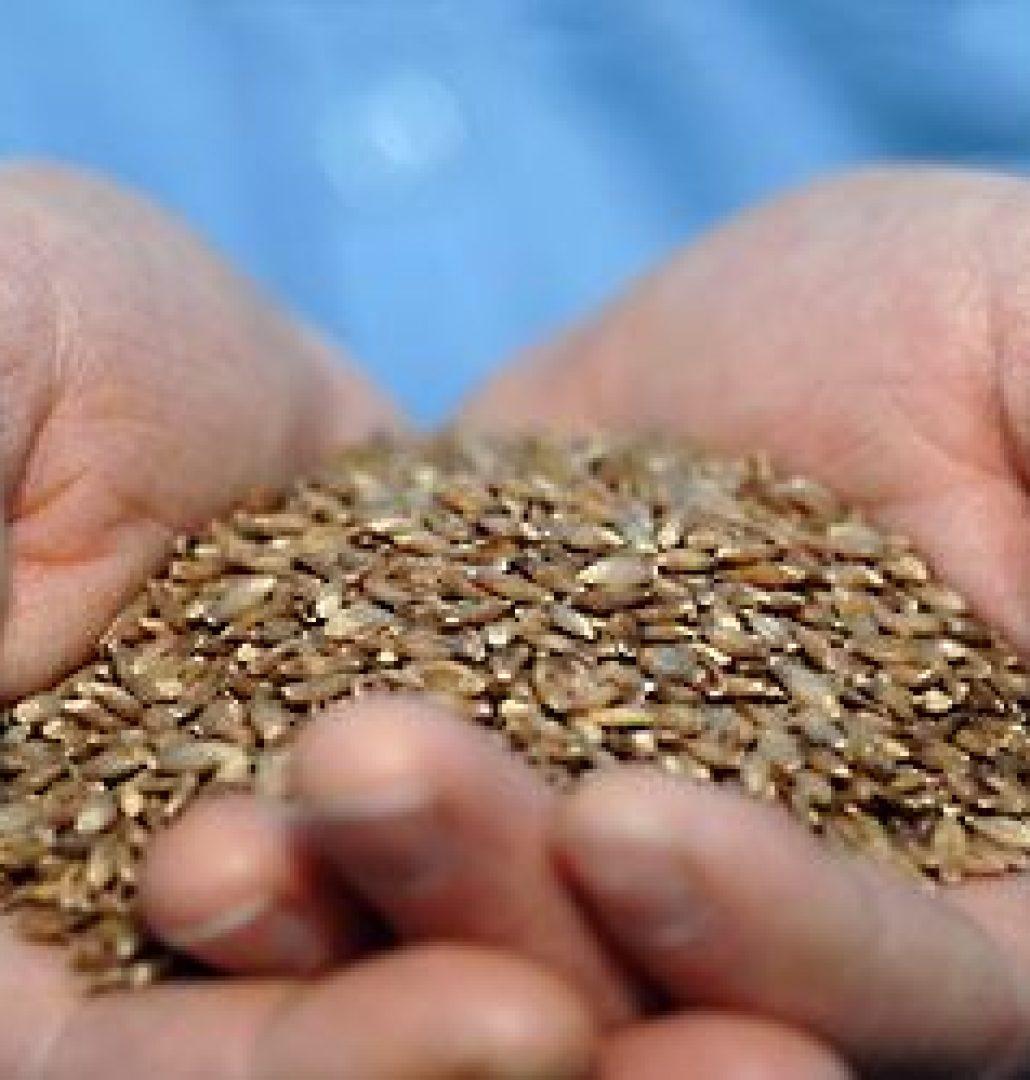 Barley hands